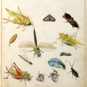 Fleurs-et-insectes jacques deguin.jpg