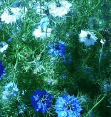 symphonie de bleu.jpg