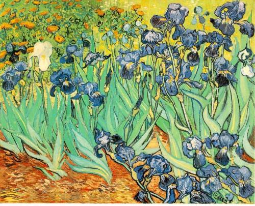 Iris de van goh.jpg